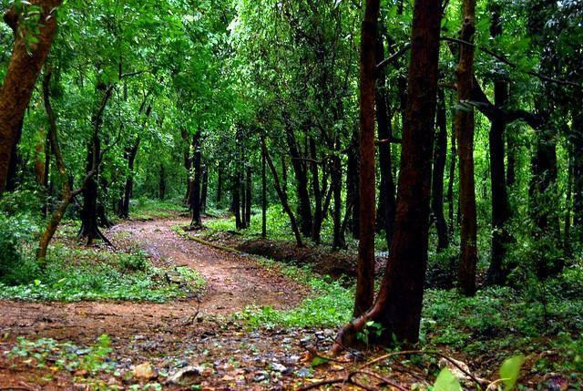 വികസനവും കാത്ത് മേമല, പോത്തംതോട് മലയോരവാസികള്